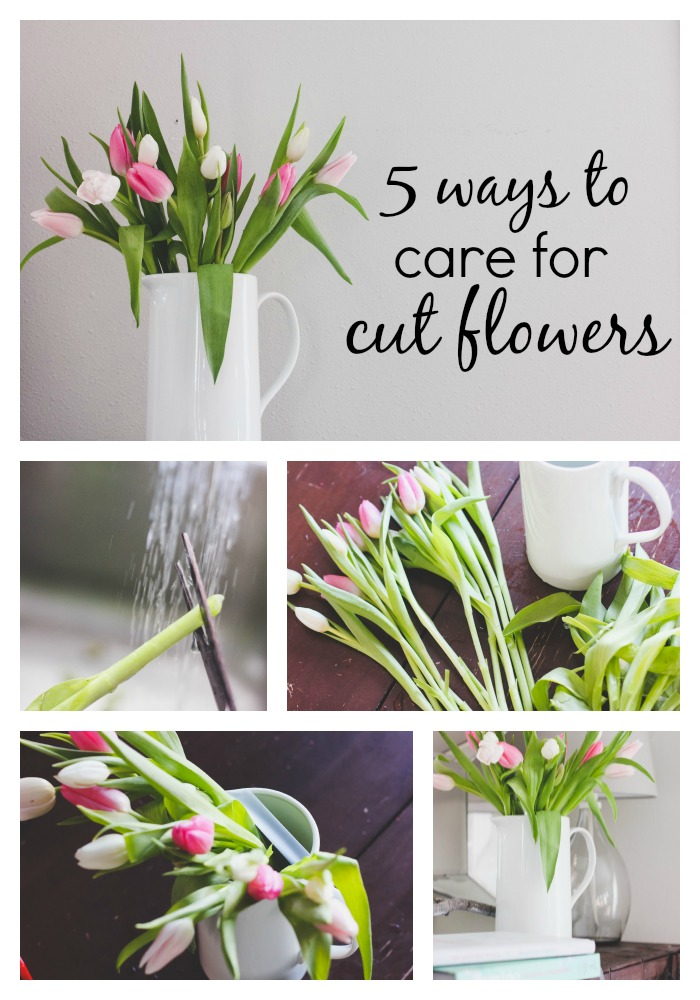 5 tips for caring for cut flowers - Ways to make your flowers last longer ...