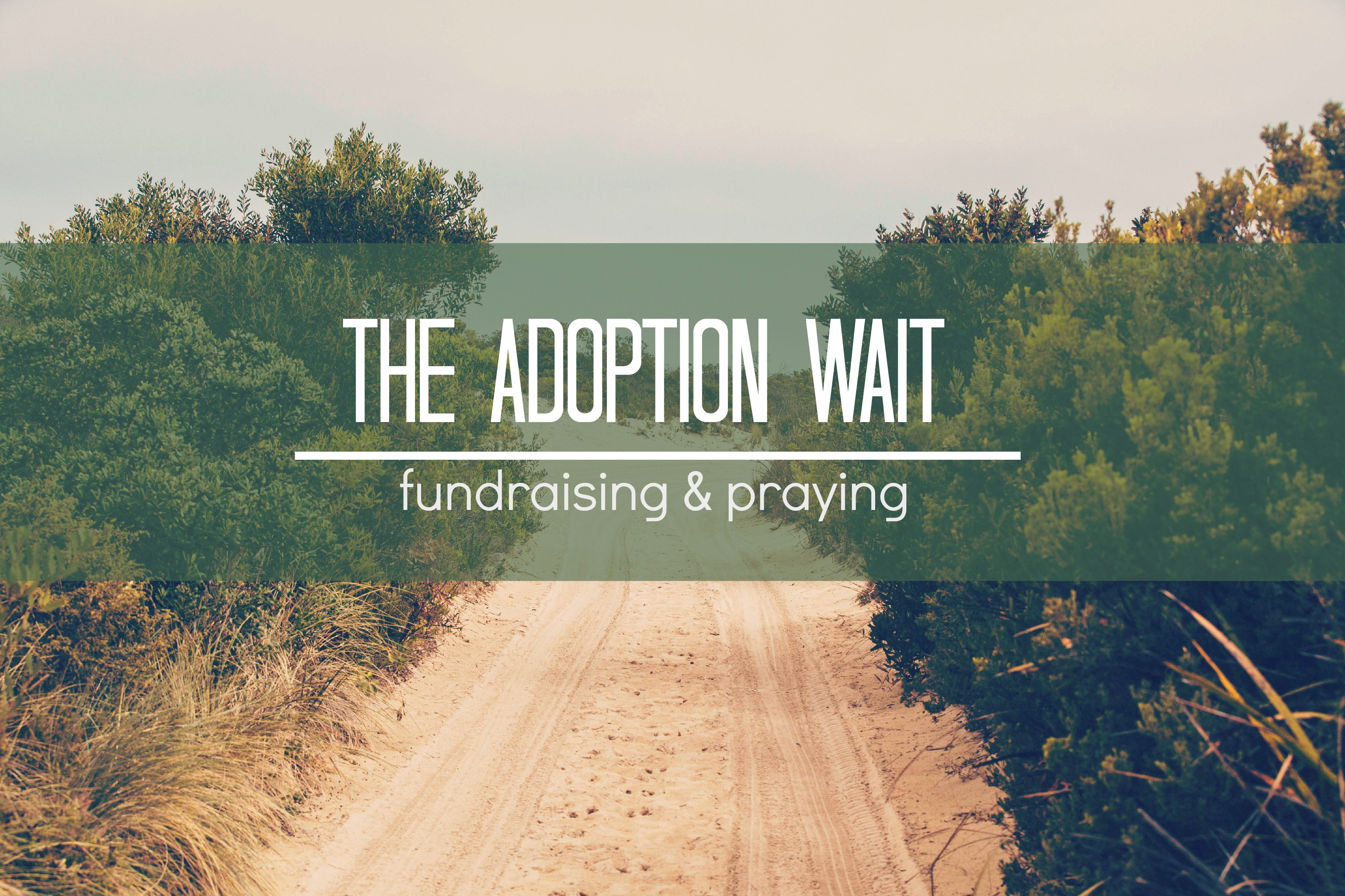 Fundraiser Results & Adoption Thoughts