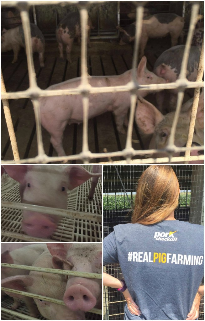 Real Pig Farming in Iowa. #IATourDePork