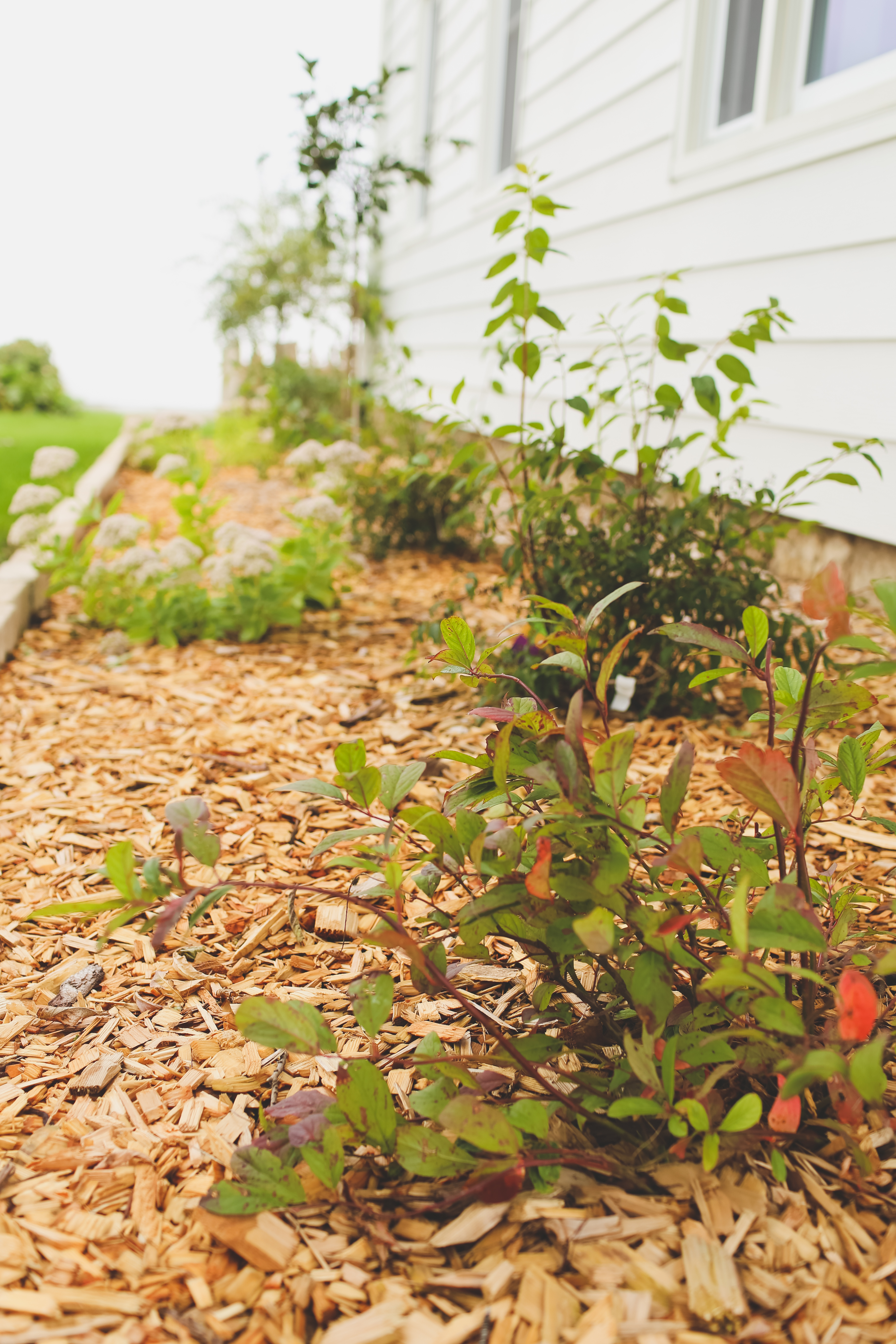 Simple Farmhouse Landscaping A First Look At Progress With