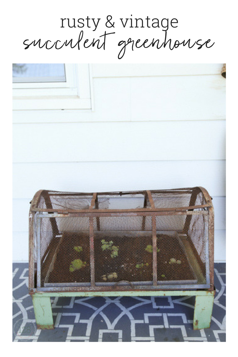 A vintage and rusty green metal greenhouse is used on the farmhouse front porch for succulents.  From Homestead 128.