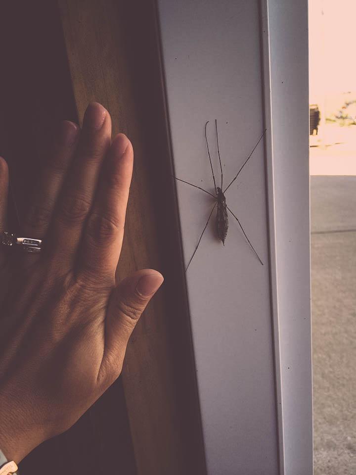 bugs (1 of 1)
