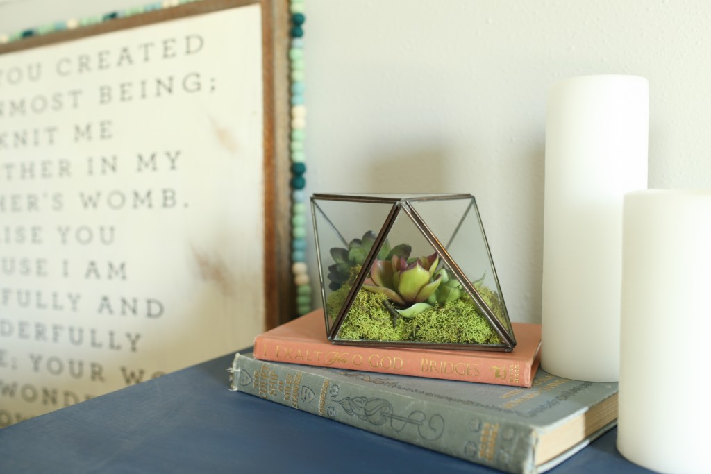 Succulent terrarium detail with navy dresser. The Dempster Logbook.