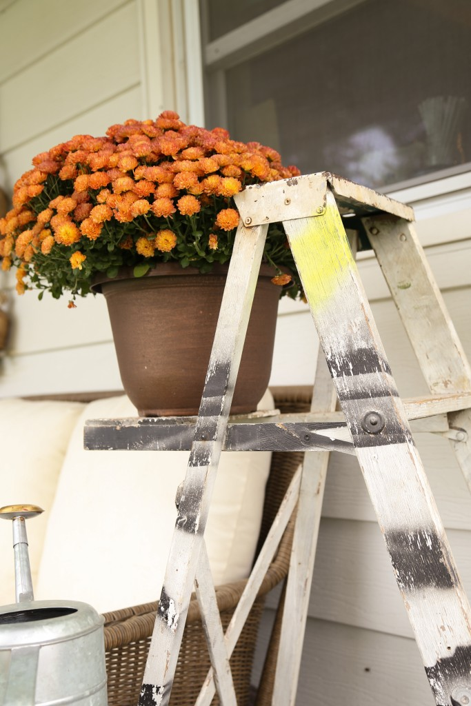 Old ladder is used as a plant stand.